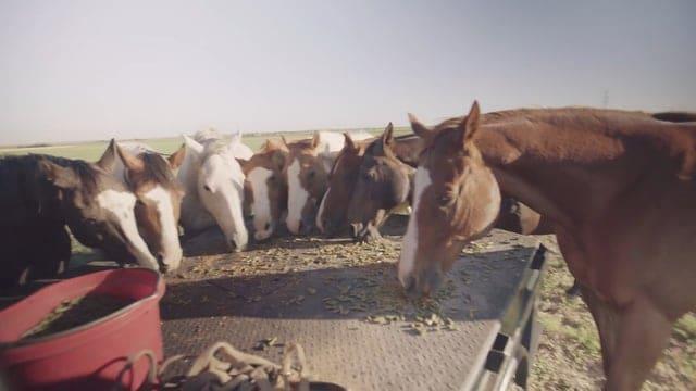 Texas Boys Ranch Lubbock - Thumbnail 01