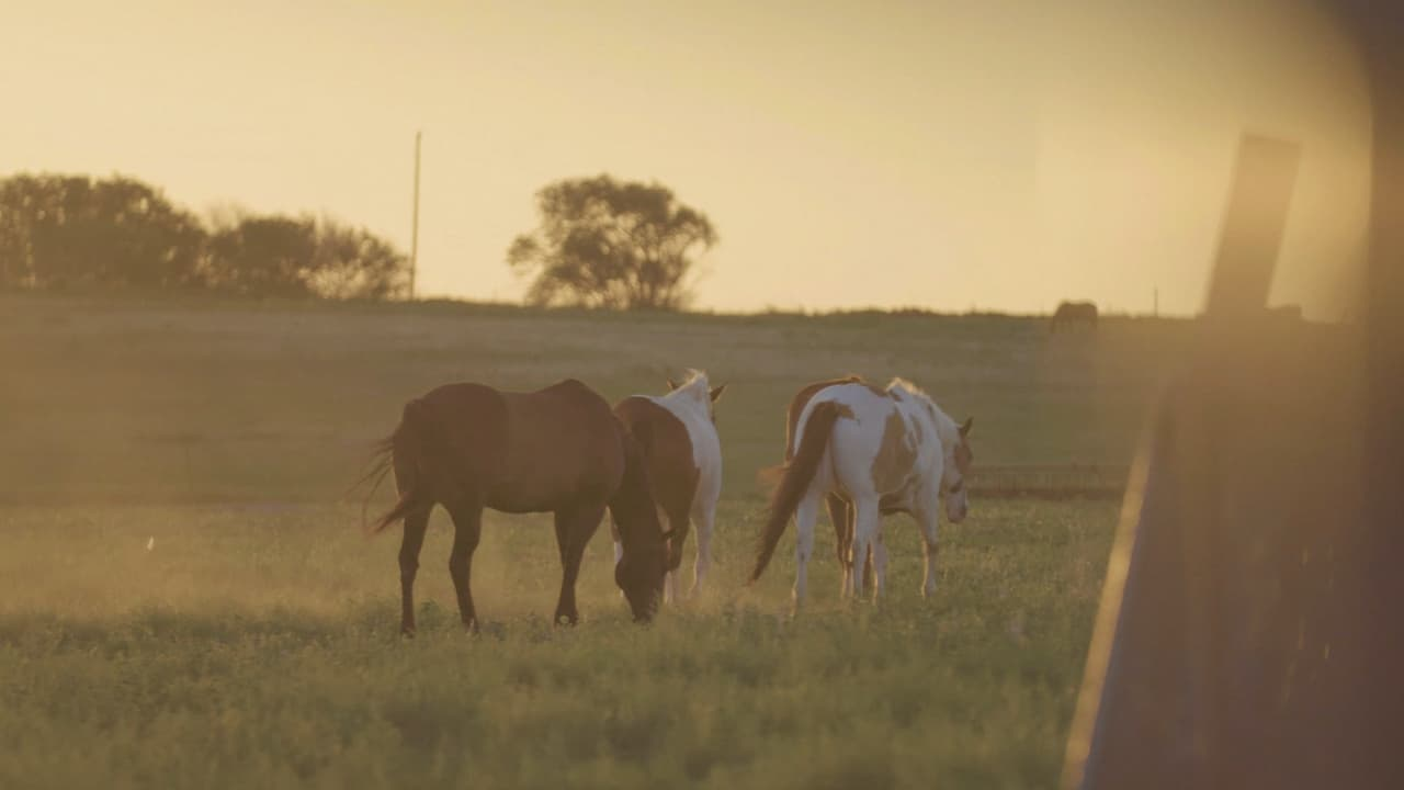 2020-09-14_Texas Boys Ranch - Lubbock Equine Therapy - Screenshot 01